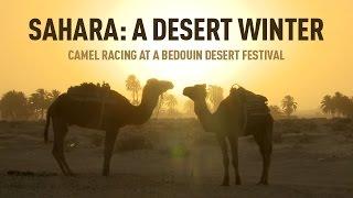 Sahara: A Desert Winter. Camel racing at a Bedouin desert festival
