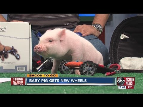 Chris P. Bacon on ABC Action News