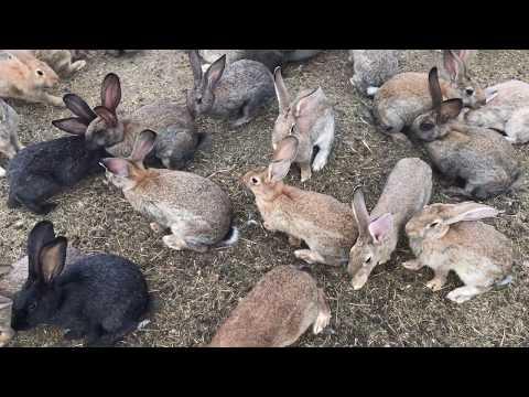Разведение кроликов в яме, но не в яме.  Breeding rabbits in the pit, but not in the pit . Украина.