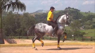 Incrível Cavalo que dança musica nova da Ivete Sangalo e Shakira!!