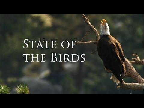 Réchauffement climatique: plus de la moitié des oiseaux d'Amérique du Nord pourrait disparaître