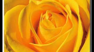 Watch Johnny Lee Yellow Rose Of Texas video