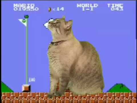 Miniatura del vídeo Cat plays Super Mario Bros.