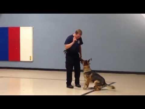 Meet Spectrum Health's Security Dog—Fix
