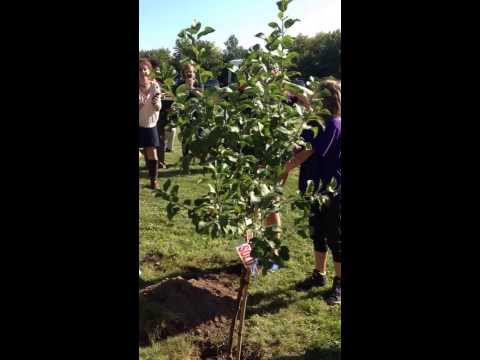 Harriet Tubman apple tree planting