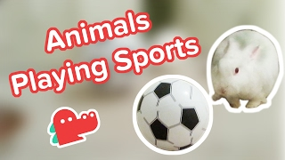 Animals Playing Sports Compilation