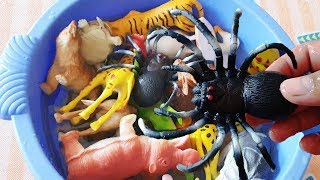 Learn Wild Name Animals With Toys Animals, Cow Horse, Tiger | Educational Video for Kids