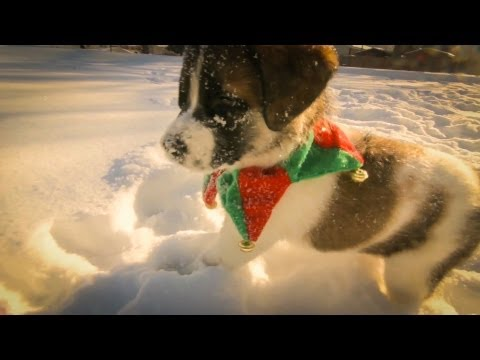 Everybody loves puppies in snow