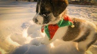 Los perritos también disfrutan de la navidad y la nieve