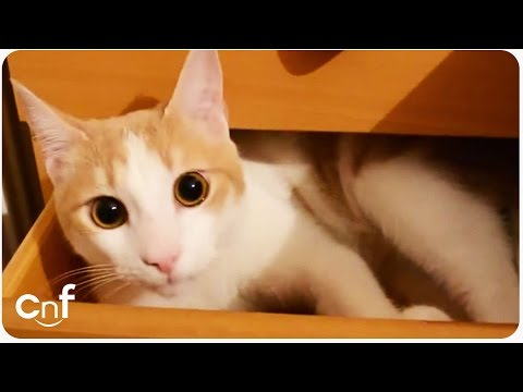 Hero Cat Compilation | Why We Love Cats