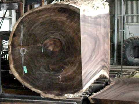 モンキーポット・レインツリー・raintreeの製材