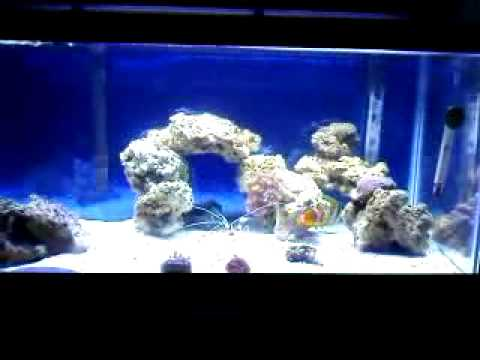 20 gallon long saltwater tank youtube for 20 gallon saltwater fish tank