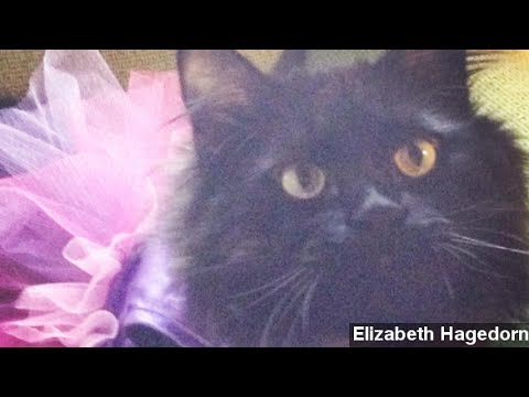 Study Sheds Light On Why Your Cat Hates That Tutu