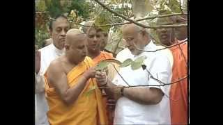 PM Modi offers Prayers at Sri Maha Bodhi Tree in Anuradhapura, Sri Lanka