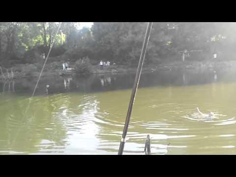 Каталог - Разное - Ассортимент - Рыболовная барахолка