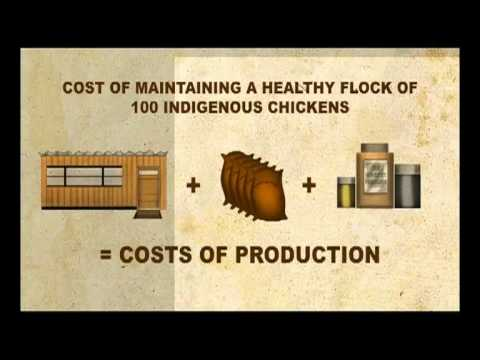 Shamba Shape Up - Cost Breakdown of Keeping Chickens Thumbnail