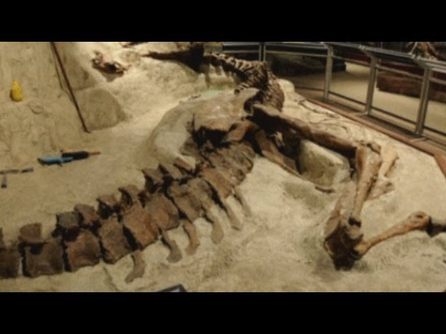 Rare T-Rex bones: Fossilised dinosaur unveiled at Washington Smithsonian Natural History Museum