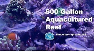 500 Gallon Aquacultured Reef Fincasters Episode 164