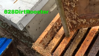 Hive Beetles Take Advantage Of Retired Beekeeper, How To Clean Up A Beetle Infested Hive