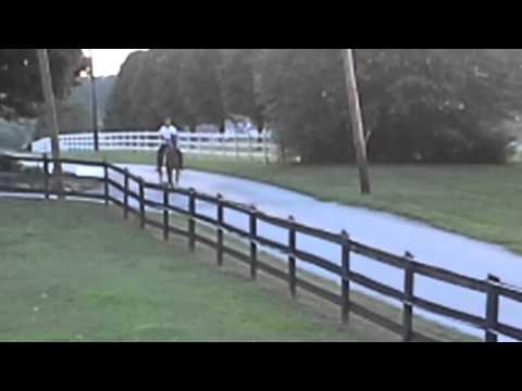Speed Racking Horse For Sale 7 Yr Old Mare Stroker