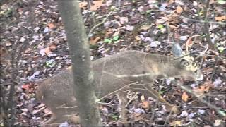 Ohio bowhunting deer Tuscarawas county