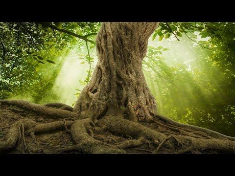 Relaxing Celtic Music: Soothing Sleep Music, Peaceful Music, Calming Harp Music ★88