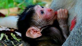 Newborn Janet Breastfeeding Like Sing Karaoke - How About Health Baby Janet?