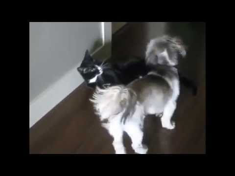 Cats Sitting on Dogs Faces ▶ Dog Sits on Cats Face