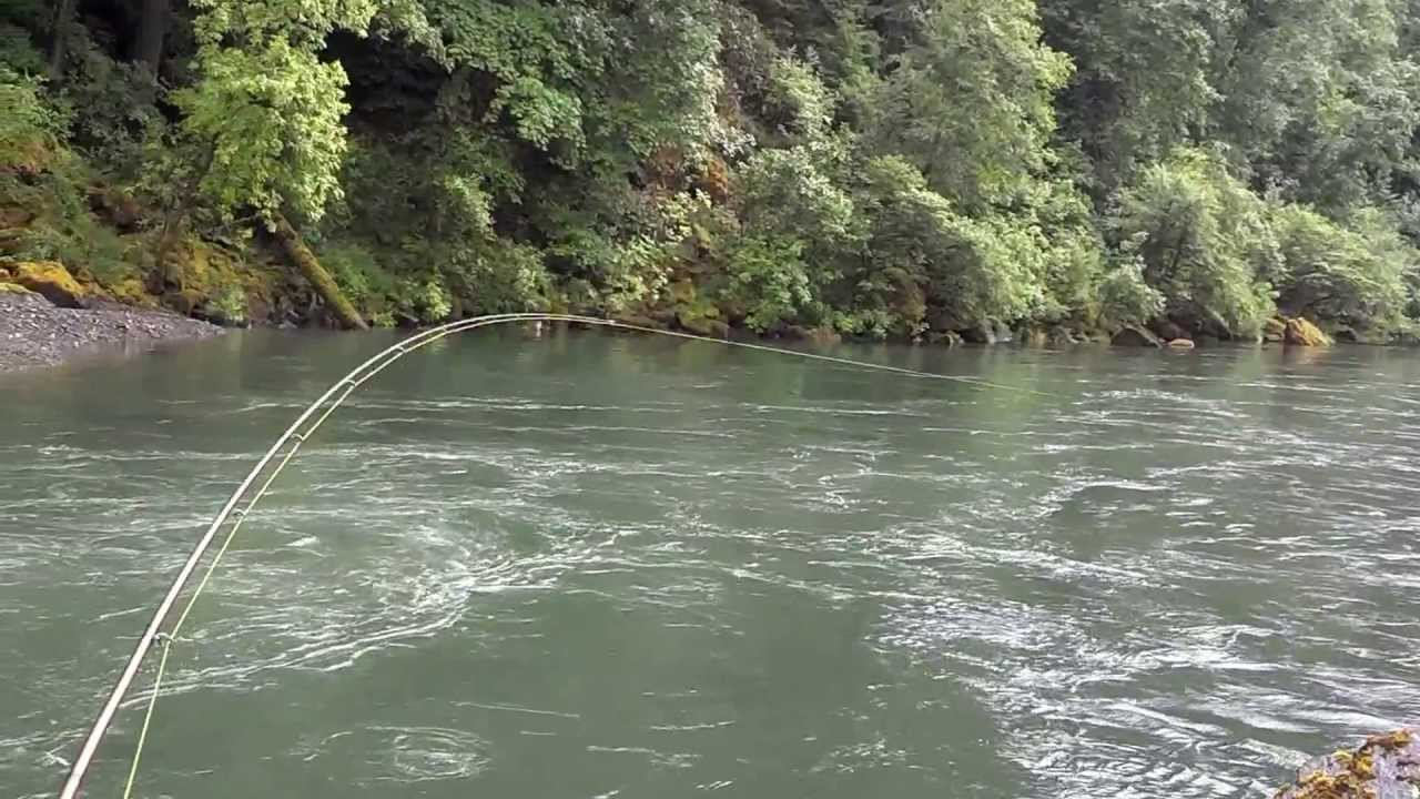 Oregon chinook salmon fishing 2013 umpqua river youtube for Umpqua river fishing report