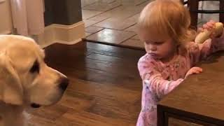 Funny dog trying to take a girl's Banana