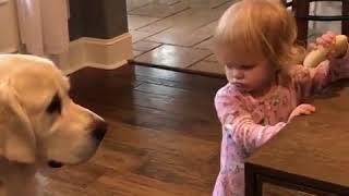 Funny dog trying to take a girl's Banana