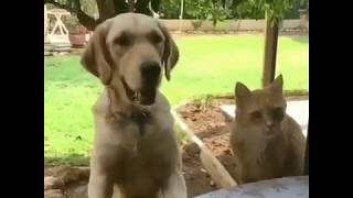LOL Try not To Laugh !!! CLEVER CAT VS DOG | FUNNY ANIMALS | FAILS 2019