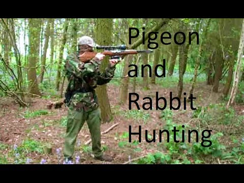 Air rifle hunting pigeon and rabbit