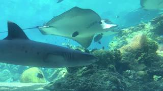 Time Lapse - Underwater reef viewing at Sea World, Gold Coast, Australia