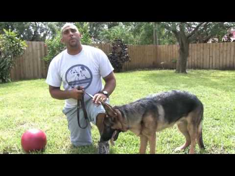 0 Dog Training Tips : Easy to Train Dog Breeds