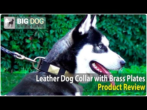 Siberian Husky, Doberman and American Bulldog Wearing Designer Vintage Dog Collar