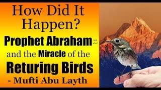 Video: In Quran 2:260, Abraham had the birds fly back to him - Abu Layth