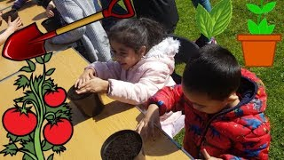 HafSameer learn to Plant (Tomatoes and Basil) (Learning life skills for kids by Every One Every Day)