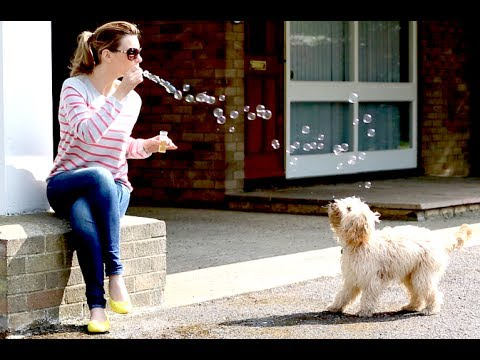 Happy: Blowing Bubbles with Dexter the Dog!