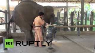 Thailand: Mosha, the three-ged elephant, just got a new!