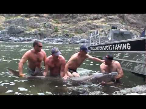 Snake River Sturgeon Fishing
