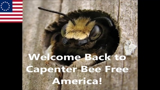 Carpenter Bee Traps Part II