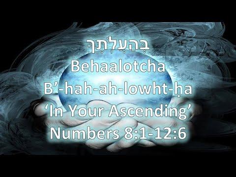 Torah Portion: Behaalotcha