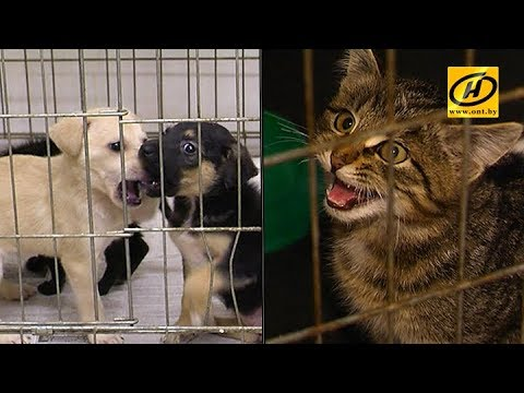Витебский приют для бездомных животных находится на грани разорения
