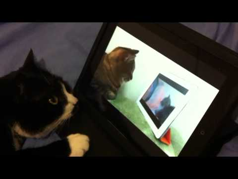 Cat watches cat watching cat watching nyan cat