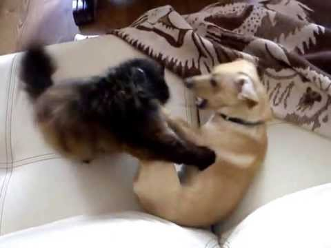 Zabawa Psa Z Kotem