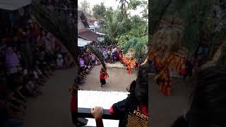 download lagu Singo Mudho Kambeng 23-8-2017 gratis