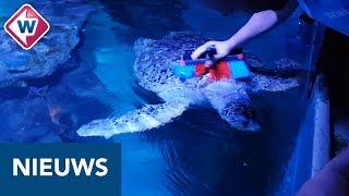Schoonmaakbeurt Ernie Video Sea Life