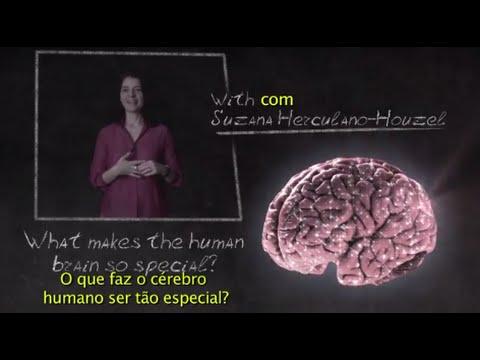 BrainStorm - What makes the human brain so special? - Suzana Herculano-Houzel
