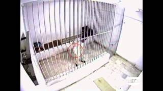 World's Wildest Police Videos: Inmate's Burning Desire